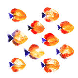 Set of watercolor discus fish Stock Photography
