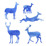 Set of watercolor doe Royalty Free Stock Photos