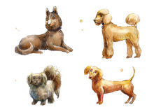 Set of watercolor dogs Stock Images
