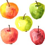 Set of  watercolor drawing apples Royalty Free Stock Photos
