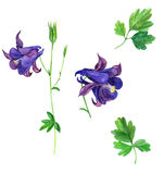 Set of watercolor drawing flowers of delphinium Stock Images