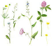 Set of watercolor drawing flowers Stock Photos