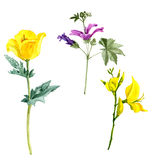 Set of watercolor drawing flowers Royalty Free Stock Photography