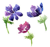 Set of watercolor drawing flowers Royalty Free Stock Image