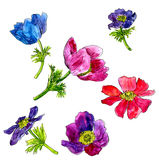Set of watercolor drawing flowers Stock Image