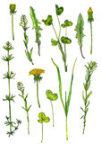 Set of watercolor drawing herbs and flowers Royalty Free Stock Images