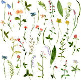 Set of watercolor drawing herbs and flowers Royalty Free Stock Photos