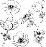 Set of watercolor drawing herbs and flowers Stock Photo