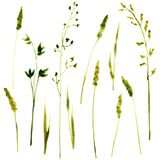 Set of watercolor drawing herbs Royalty Free Stock Photo