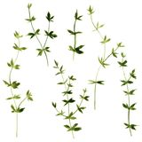 Set of watercolor drawing herbs Royalty Free Stock Photography