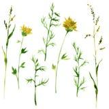 Set of watercolor drawing herbs Royalty Free Stock Photos