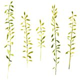 Set of watercolor drawing herbs Stock Photo
