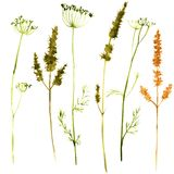 Set of watercolor drawing herbs Royalty Free Stock Images