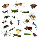 Set of watercolor drawing insects Stock Image