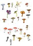 Set of watercolor drawing mushrooms Stock Photo
