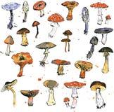 Set of watercolor drawing mushrooms Stock Image