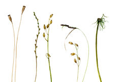 Set of watercolor drawing plants Royalty Free Stock Image