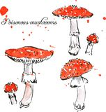 Set of watercolor drawing poisonous mushrooms Royalty Free Stock Photography
