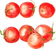 Set of  watercolor drawing tomatoes Royalty Free Stock Photos