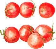 Set of  watercolor drawing tomatoes Royalty Free Stock Photos