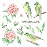 Set watercolor elements of bird and flowers, spring collection, stock illustration