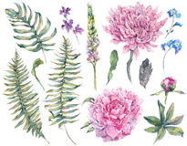 Set watercolor elements of blooming flowers. Set vintage watercolor elements of blooming peony, chrysanthemum, ferns, wild and garden flowers, watercolor Royalty Free Stock Photography