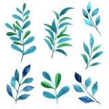 Set watercolor elements - herbs, leaf.