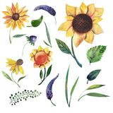 Set of watercolor elements: wild violet flowers, herbs, leaves, sunflowers. stock illustration