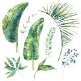 Set of watercolor exotic natural vintage banana leaves and berri stock illustration