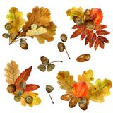 Set of watercolor fall leaves arrangements. Collection of natural hand drawn prints with autumn folliage and acorns. Bouquets of oak, rowan branches and aspen royalty free stock images