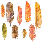 Set of watercolor feathers Royalty Free Stock Images