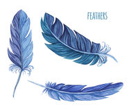 Set of watercolor feathers. Vector Stock Photos