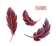 Set of watercolor feathers. Vector Stock Images