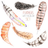 A set of  the watercolor feathers on a white background Stock Photo