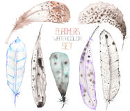 A set of  the watercolor feathers on a white background Stock Image