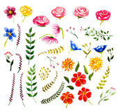 Set of watercolor floral design elements Royalty Free Stock Photography