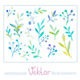 Set of watercolor floral elements Stock Photo