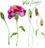 Set of Watercolor Floral Elements Royalty Free Stock Images
