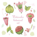 Set of Watercolor Floral Elements in Vintage Style. Set of Watercolor Floral Design Elements in Vintage Style Stock Images