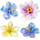 Set of watercolor flowers. Stock Photo