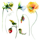 Set of watercolor flowers Stock Photos