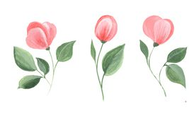 Set of watercolor flowers Royalty Free Stock Photo