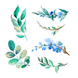 Set of watercolor flowers and leaves isolate on white background. Set of watercolor blue flowers and leaves isolate on white background Stock Image