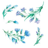Set of watercolor flowers and leaves isolate on white background Stock Photography