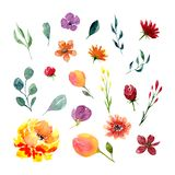 Set of watercolor flowers and leaves Royalty Free Stock Photo