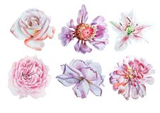 Set with watercolor flowers. Lily. Rose. Peony. royalty free stock photos