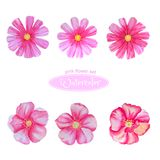 Cosmos and dog-rose, flower heads. Isolated on white background stock illustration