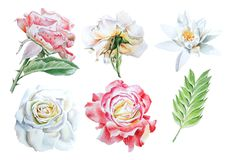 Set with watercolor flowers. Rose. Lily. Royalty Free Stock Photos