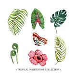 Set of watercolor foliage, floral, butterfly illustration for decorative use