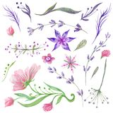 Set of Watercolor Forest Flowers and Herbs Stock Images
